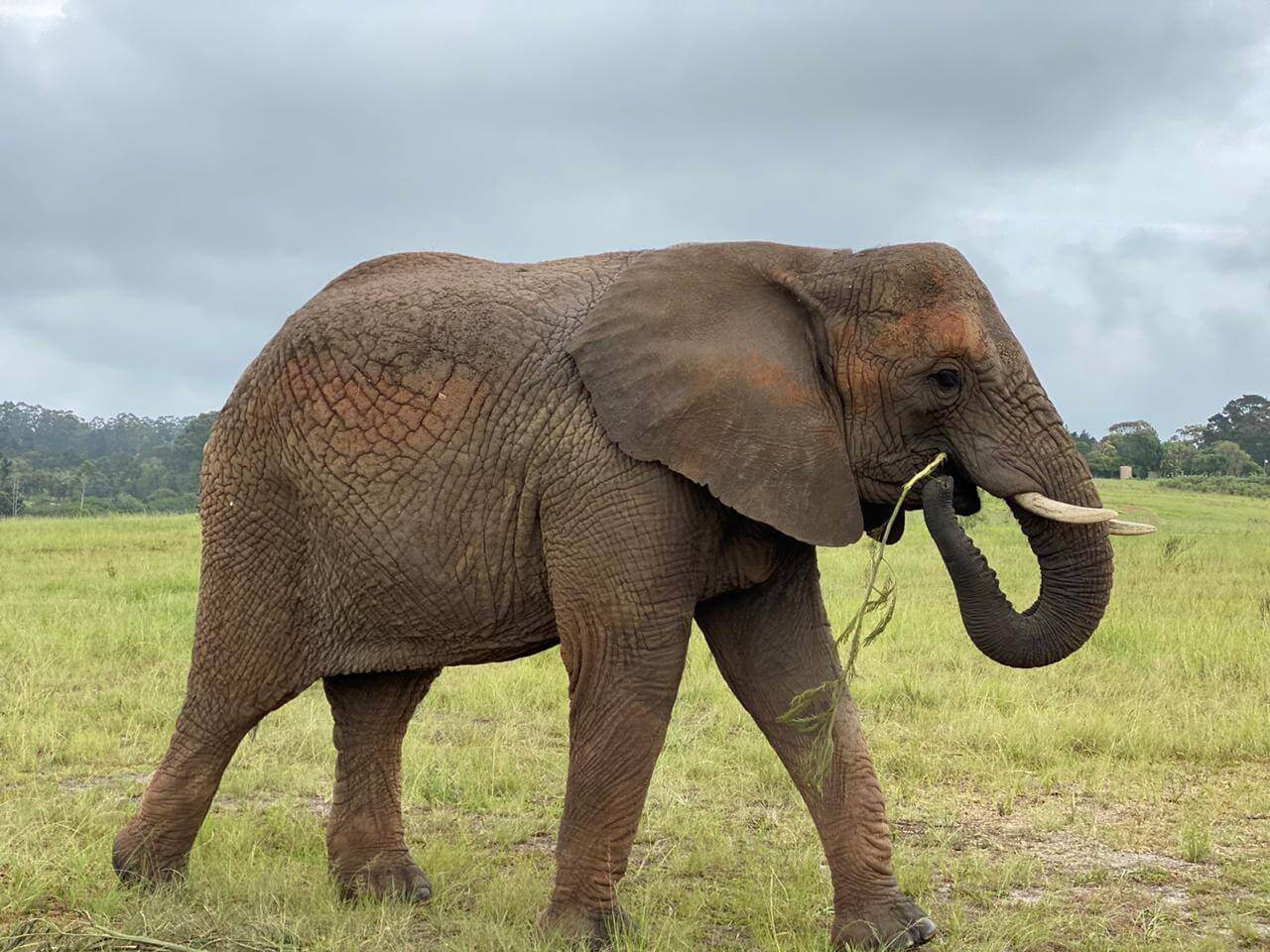 about-elephant