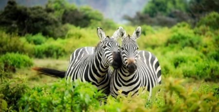African Dream Foods supports wildlife conservation