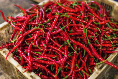 why-humans-love-hot-sauce-chillies