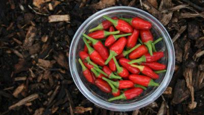 history-of-peri-peri-peppers-in-bowl