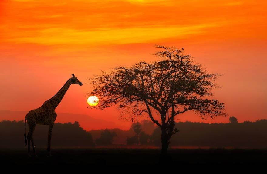 Best-Safari-Sunset