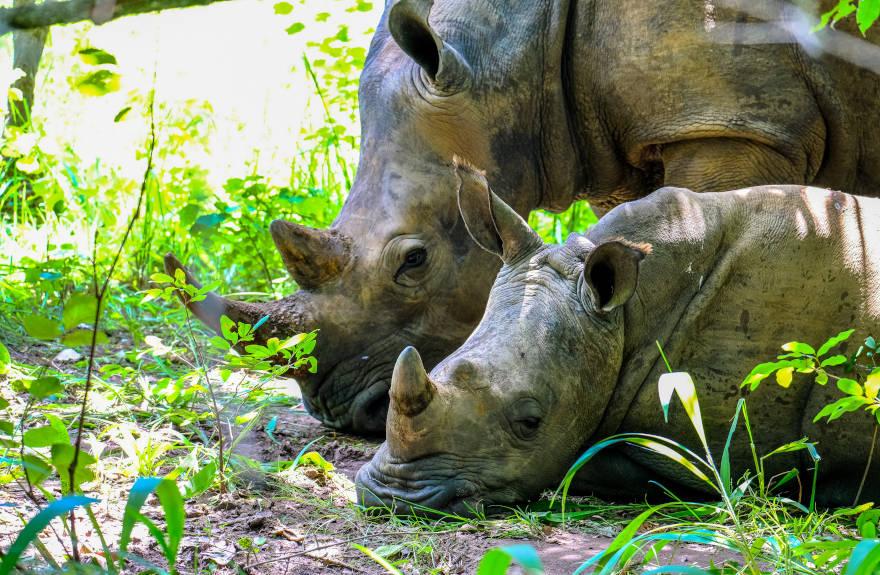 save-the-rhino-baby