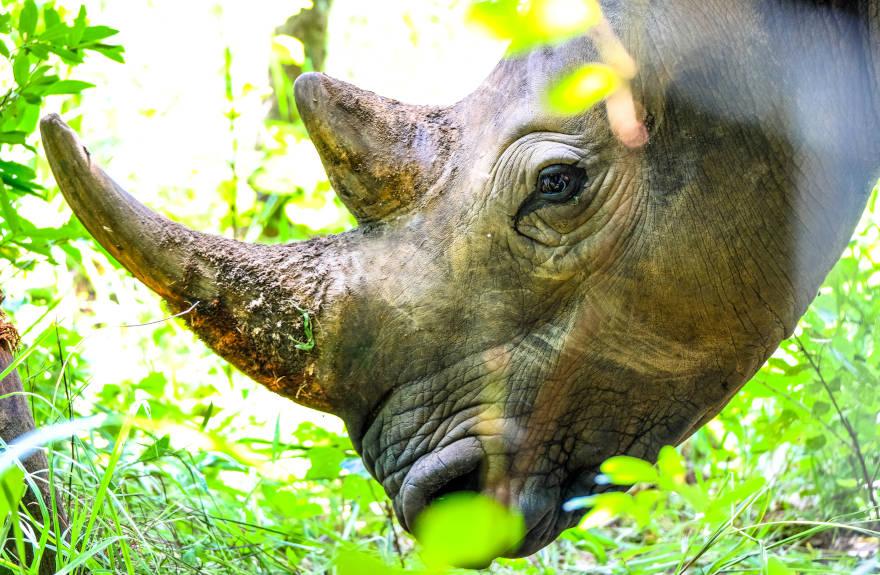 save-the-rhino-close-up